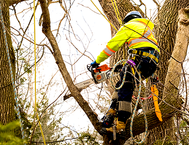 Toronto GTA Tree Trimming and Pruning